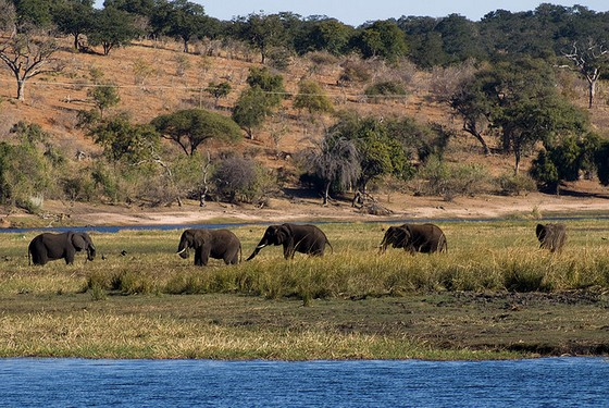Chobe national Park m