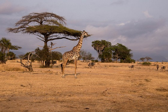Selous Game Reserve 2 m