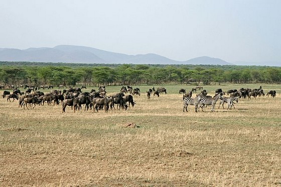 Serengeti National Park 640