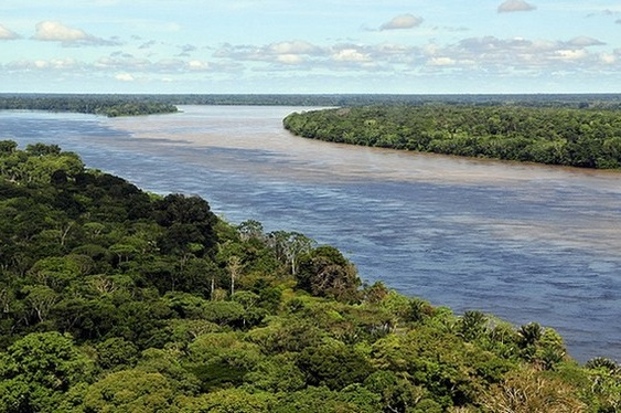 Amazonas tropical forest - large