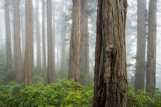 Redwood NP 3