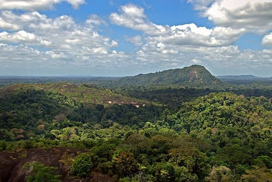 Central Suriname Natural Reserve